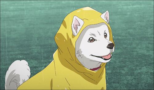 天気の子・ソフトバンク白戸家のお父さん犬の出演シーンはどこ?2回の登場をネタバレ紹介
