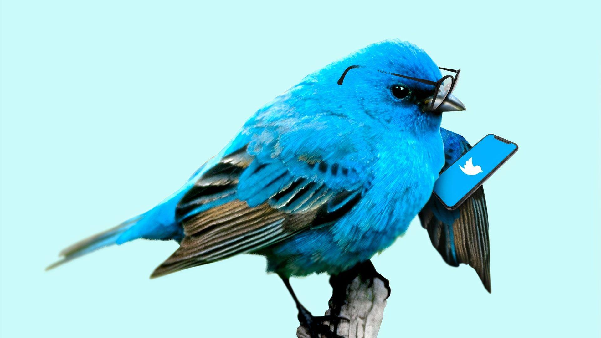 鳥がTwitterをしている